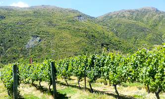 Central Otago Pinot Gris 2018