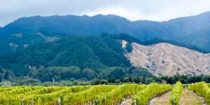 Organic Marlborough Pinot Noir