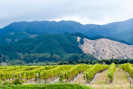 Organic Marlborough Pinot Noir