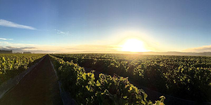 Marlborough Pinot Gris 2020
