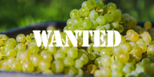 Grapes Wanted