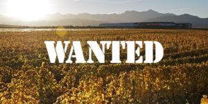Wanted Marlborough